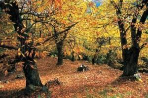 δάσο φθινοπωρινό